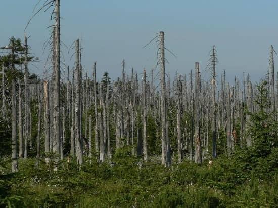 Forest Damaged by Acid Rain